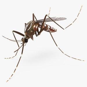 mosquito pose 3 max