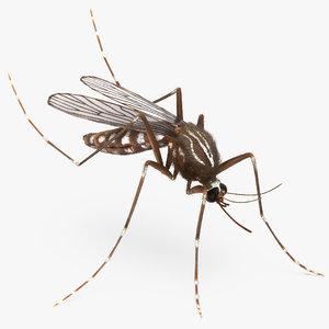 mosquito pose 3 fur 3d max