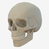 skull low poly and high poly pbr