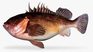 3d model brown rockfish