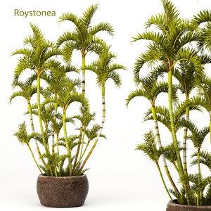 roystonea palms max