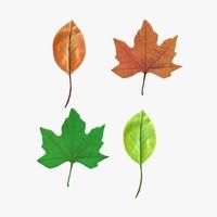 leaves vrayforc4d 3d model