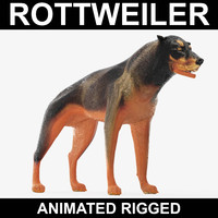 realistic rottweiler rigged 3d model