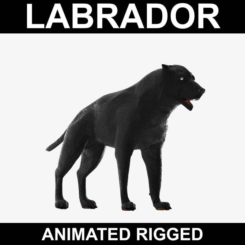 3d realistic labrador rigged model