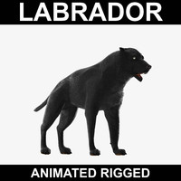 Labrador (Animated Rigged)