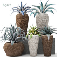 Agave collection