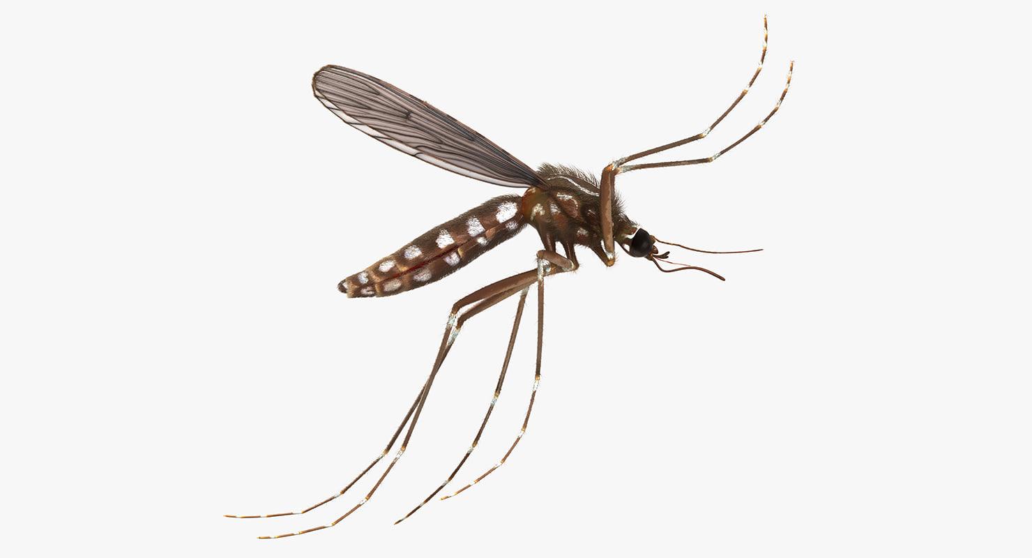 mosquito flies fur 3d max
