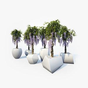 3d wisteria 02