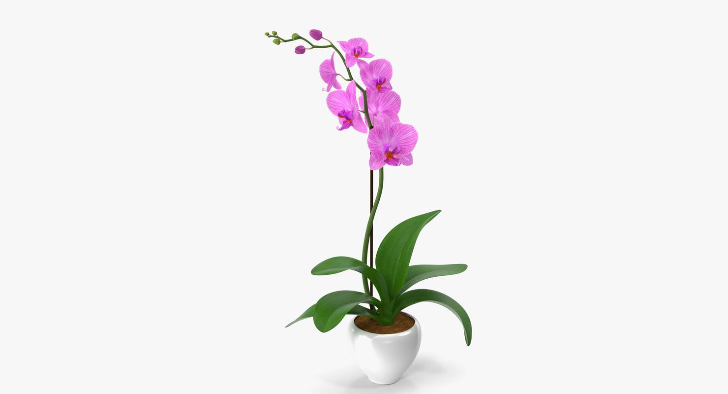 3d obj orchid modeled leaf