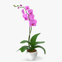 orchid modeled leaf 3d model