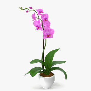 3d obj orchid modeled leaf