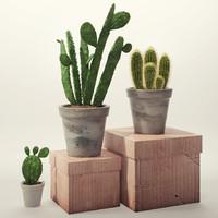cactus houseplant 3d obj