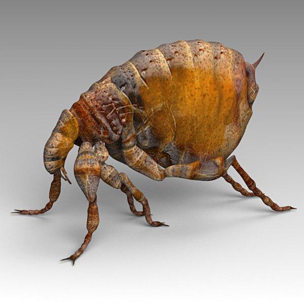 3d flea model