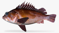 3d model copper rockfish