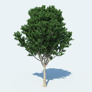 3d model of tree v1