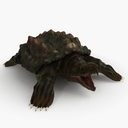 Snapping Turtle 3D models