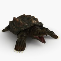 3d alligator turtle animation