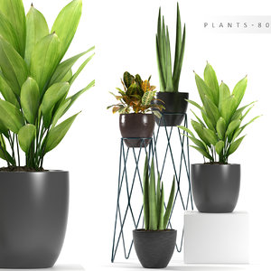 max plants 80