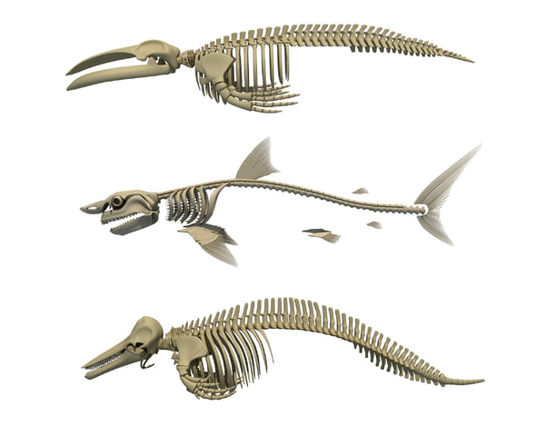3d model aquatic skeleton shark