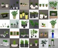 plants flowers max