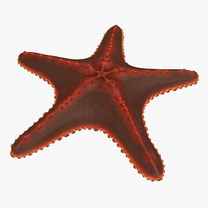 sea star 3d 3ds