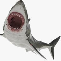 obj realistic shark rigged