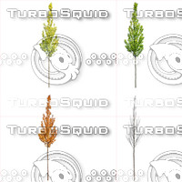 Cutout tree - 4 seasons - European hornbeam (Carpinus betulus)