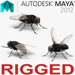 3d fly rigged