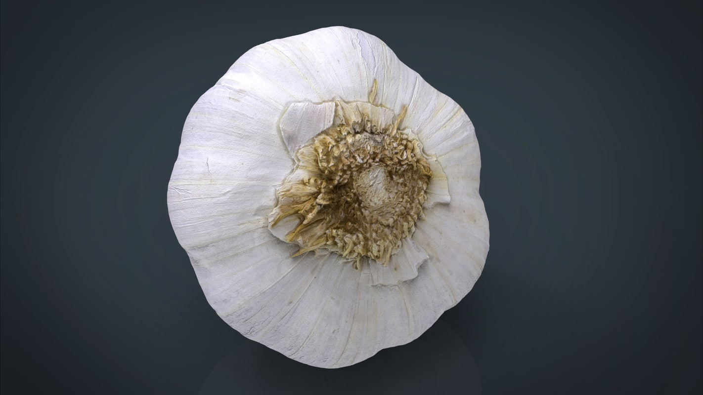 photorealistic garlic 3d max