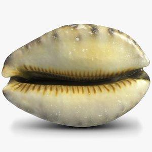 3d sea shell cypraeidae cowry model