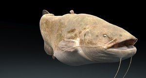 max catfish fish