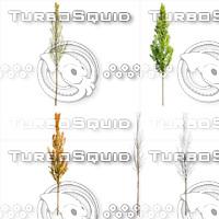 Cutout tree - 4 seasons - European Hornbeam (Carpinus betulus)