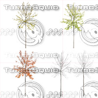Cutout tree - 4 seasons - Cherry tree (Prunus avium)