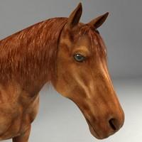 realistical horse 3d model