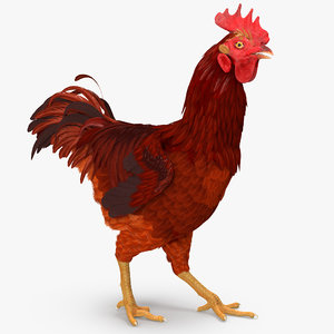 3d model brown hen walking