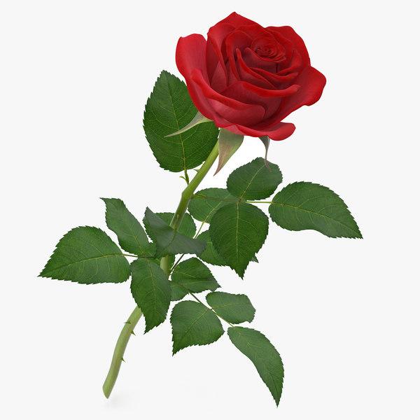 rose 5 3d model