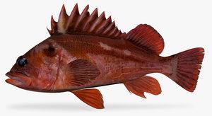 copper rockfish 3d x