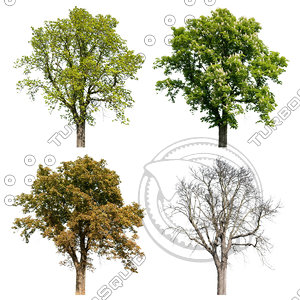 Cutout tree - 4 seasons - Horse chestnut (Aesculus hippocastanum)