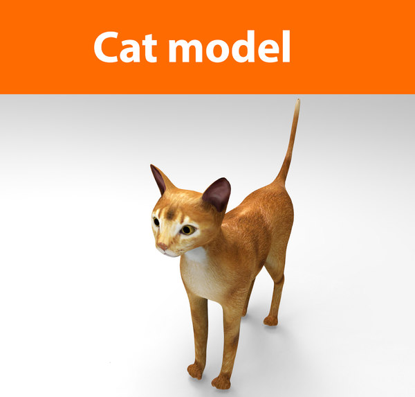 cats feline 3d model