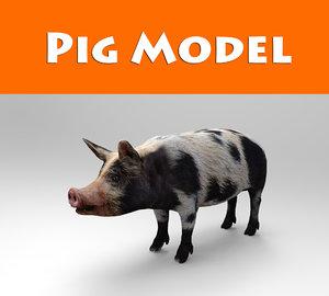 max pig animals mammal