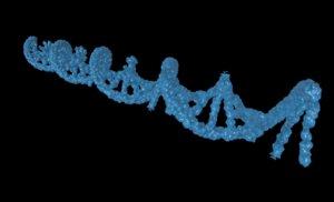 rna medical scientific 3d model