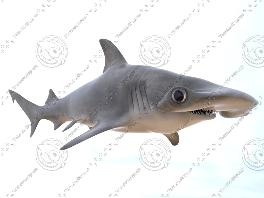 realistic hammerhead shark 3d model