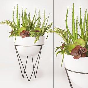succulent arrangement ma