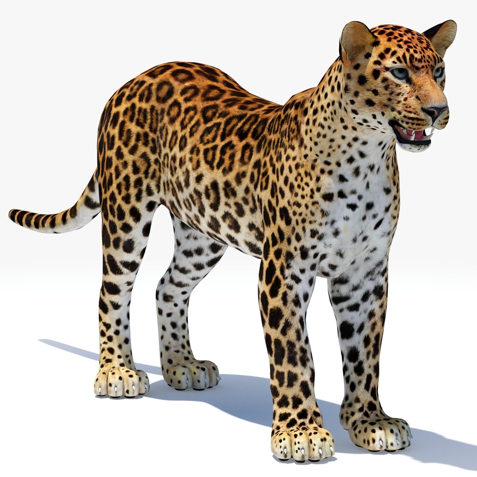 max cat feline