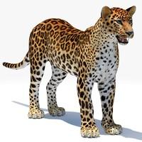 3d leopard 2