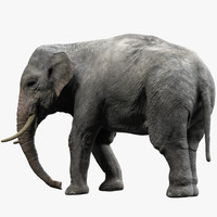 3d model elephant rigged