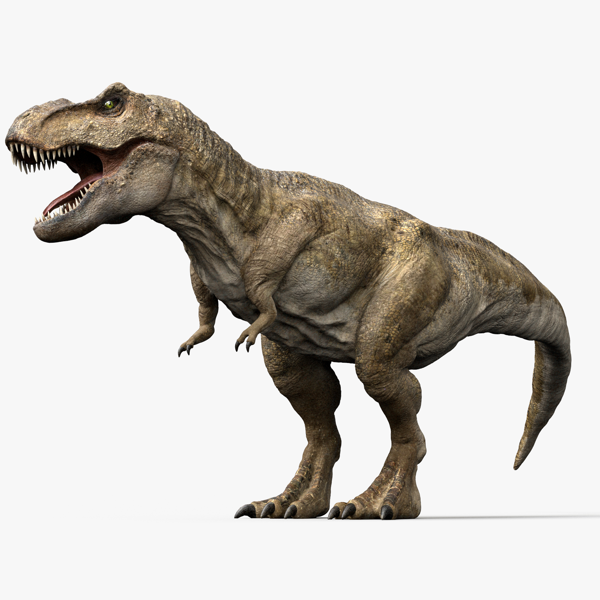 3d model v-ray rigged rex