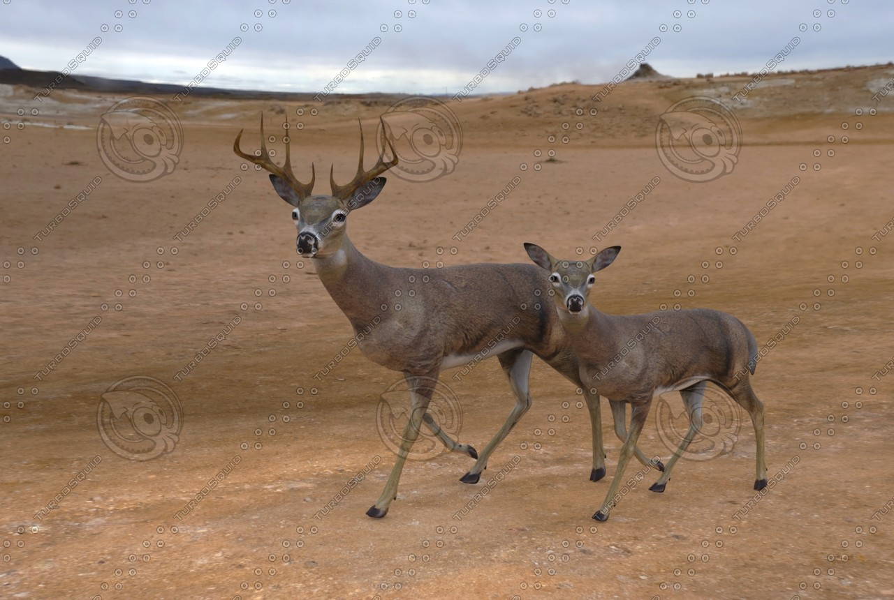 ma deer rigged