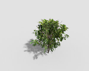 3d shrub games model