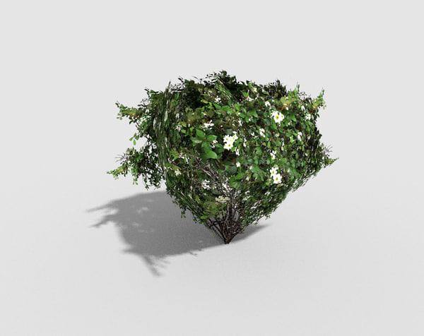 shrub games 3d model